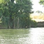 2.2-Reed-Beds